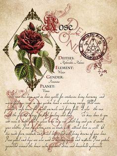 Cackling Cauldron ~ BOS~ Rose page