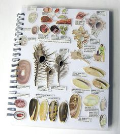 Beachcombing Sketch Book, possible layout for some of my sketchbook pages ? Sketchbook Layout, Sketch Journal, Artist Journal, Sketchbook Pages, Sketchbook Inspiration, Sketchbook Ideas, Observational Drawing, Visual Diary, Nature Journal
