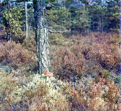 Fall.mushroom