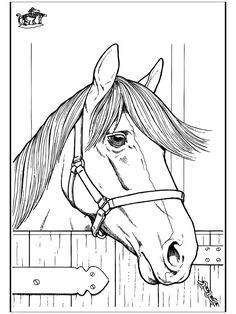 Funnycoloringcom Animals Coloring Pages Horses Horse Head 2