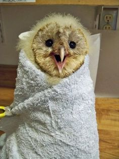 This fluffy little head is the perfect star upon this cozy burrito tree. 30 animals wrapped like burritos