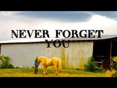 *I was going to post the barn Vlog today, but I accidentally deleted the whole video, and i also deleted my intro and outro of the video too😩. Never Forget You, Channel, Horses, Youtube, Horse, Youtubers, Youtube Movies