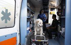 """""""O Grito do Bicho"""": Voluntários socorrem animais vítimas de terremoto ..."""