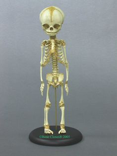 Analysis of the Atacama humanoid alien - Openminds.tv