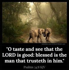 Biblical Quotes, Bible Verses Quotes, Bible Scriptures, Psalms Of David, O Taste And See, Good Woman Quotes, King James Bible Verses, The Lord Is Good, Inspirational Verses
