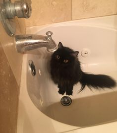 Waiting for me to turn on the faucet so she can have a drink – Aww Cat Cute Cat Gif, Cute Funny Animals, Cute Baby Animals, Animals And Pets, Silly Cats, Crazy Cats, Crazy Cat Lady, Funny Cats, Pretty Cats