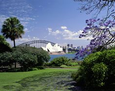 Royal Botanic Gardens, Sydney-On my trip to Sydney in 1997, I loved walking in the Botanic Garden enjoying the plants and fantastic view of Sydney harbor.