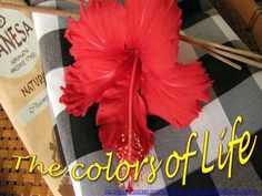 the Colors of Life Religious Rituals, The Longest Journey, Fifth Element, Names Of God, Buddhist Monk, Text Pictures, Life Philosophy, Color Of Life, Color Mixing