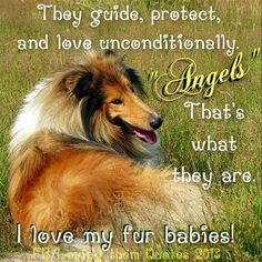 Dog fur baby quote via Loving Them Quotes on Facebook