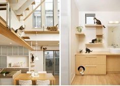 Cat S Apartment Your Pet Kitty House Heaven Houses An