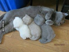 Your kitty printer is running out of toner