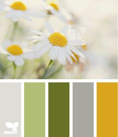 Daisy colours - design seeds (Just love this! Spring Color Palette, Colour Pallette, Color Palate, Spring Colors, Colour Schemes, Palettes Color, Green Colour Palette, Color Combos, Design Seeds