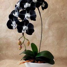 Piante Da Appartamento Orchidea.24 Fantastiche Immagini Su Orchid Fiori Fiori Orchidea E Piante