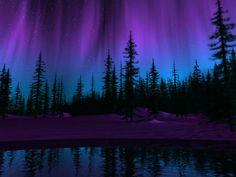 purple northern lights wallpaper