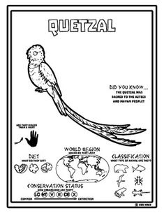 Click To See Printable Version Of Quetzal Bird Paradise Coloring Page