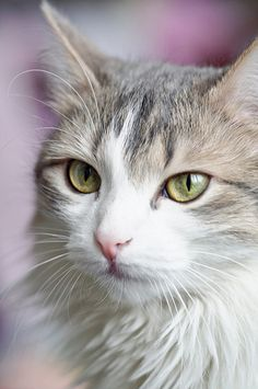 cat ♡ ... via Hiro Tak @takane .. 😊 Cute 귀여워 🐱 🐯 Kitty 키티 Cat 고양이 Gato 😆 Happiness 행복 Felicidad 📹 📷📱Picture Pic Photo Photoshop 사진 Foto 🎨 Art 아트 Arte @Neferast .. #😊 #Cute #귀여워 #🐱 #🐯 #Kitty #키티 #Cat #고양이 #Gato #😆 #Happiness #행복 #Felicidad #📹 #📷 #📱#Picture #Pic #Photo #Photograph #사진 #Foto #🎨 #Art #아트 #Arte shared by @Neferast #Neferast #CatsBecauseCats
