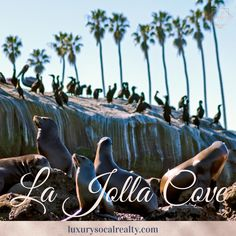 Let us guide you home search La Jolla real estate & La Jolla homes for sale. Helping everyone find their place in the world LOCAL La Jolla CA REALTORS® La Jolla Seals, La Jolla California, La Jolla Cove, Seal Beach, Sea Lions, Summer Activities, Snorkeling, Artsy Fartsy, Kayaking