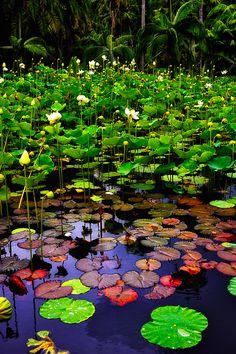 Sir Seewoosagur Ramgoolam Botanic Gardens, Pamplemousses, Mauritius