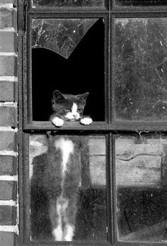 Kitty looking out a window. pet photography, broken window, black and white, photo, nature, urban, kitten, cat, blight, ruins, sad kitty