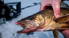 Temptation 'Eyes Walleyes Dave Csanda aggressive ice fishing Dave Genz stick move mobile testing new areas jigging tactics