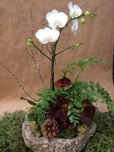 Gardening Container Orchid with ferns, twigs and pinecones, by Container Garden Artisan Kris Blevons Orchid Flower Arrangements, Flower Arrangements, Indoor Gardens, Plants, Container Plants, Mini Garden, Orchid Arrangements, Flower Planters, Container Gardening
