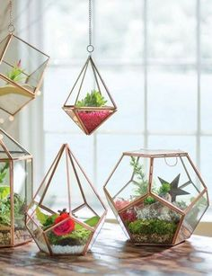 """Prism Terrarium We are want to say thanks if you like to share this post. - """"DIY & Crafts Lovers"""" -Hanging Prism Terrarium We are want to say thanks if you like to share this post. Small Terrarium, Terrarium Plants, Terrarium Ideas, Succulent Terrarium, Gold Terrarium, Terrarium Wedding, Terrarium Decorations, Desk Decorations, Hanging Glass Terrarium"""