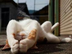 Cat up side down