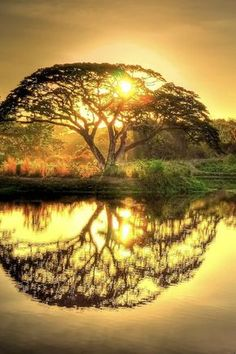 Beautiful sunset that makes the tree look like the Celtic Tree of Life! Beautiful Sunset, Beautiful World, Beautiful Places, Beautiful Pictures, Beautiful Nature Photos, Beautiful Forest, Stunningly Beautiful, Amazing Photos, Beautiful Scenery