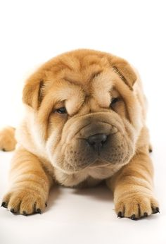 I seriously need one of these dogs in my life!!