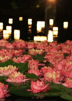 A floating lotus garden alight with candles greets #FSJet guests at @Four Seasons Resort Chiang Mai.