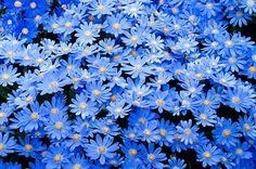 Gorgeous blue flowers