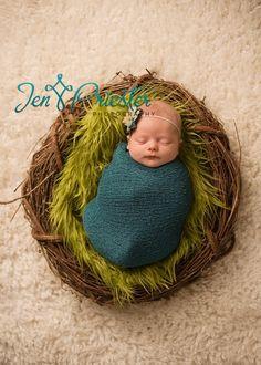 Little Baby bird in a nest