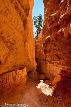 Navajo Trail Cavern, Bryce Canyon - http://andrewprokos.com/photos/landscapes/