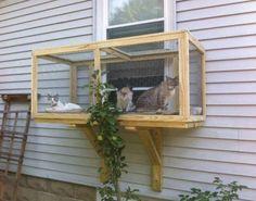 Screened Cat Window - DIY Catio