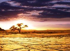Download wallpaper Africa,  savannah,  landscape,  horizon free desktop wallpaper in the resolution 4000x2945 — picture №316996