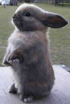 Cute bunny standing at attention. #rabbit