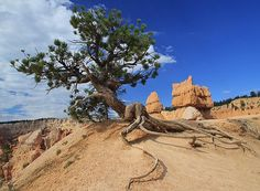 Trees of Bryce Canyon 2 by Mo Barton on Fine Art America.