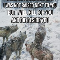 Not one of us dies this day . As we are pack we fight as one and the gates of valhala await our opposition Epic Quotes, Badass Quotes, Wisdom Quotes, True Quotes, Great Quotes, Inspirational Quotes, Motivational Quotes, Wolf Pack Quotes, Wolf Qoutes