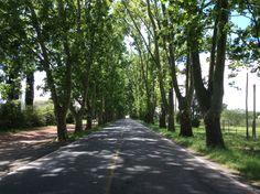 Árvores - Colônia del Sacramento