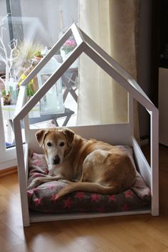 Why is using a dog house a good idea? Most people tend to have the misconception that dog houses are meant for only those dog owners who intend to keep their dogs outside. Animals And Pets, Cute Animals, Dog Hotel, Dog Shop, Pet Home, Dog Accessories, Dog Friends, Fur Babies, Your Dog