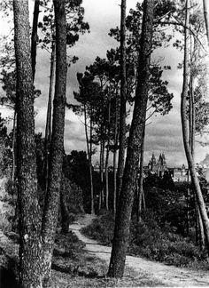 Camiño de Santiago | Road to Santiago