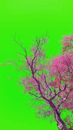 Fotografía de Naturaleza  Greivin Chavarria Bolaños  San Isidro de Heredia, Costa Rica - 2015 greivinchavarria@gmail.com