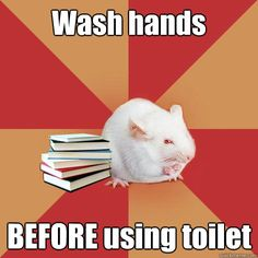 wash hands before using toilet - Science Major Mouse