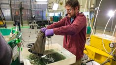 This video leaves me hopeful about oil pollution in our waterways. Super-absorbent sponge is so quick, and both sponge and recovered oil can be reused.