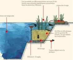 natural swimming pool cross section plan view regeneration plant root zone design pool ideas What You Need To Know About Natural Swimming Pools - Dig This Design Swimming Pool Pond, Natural Swimming Ponds, Natural Pond, Swimming Holes, Piscine Diy, Living Pool, Dream Pools, Cool Pools, Pool Houses