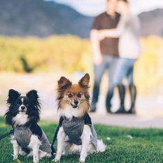 Cute Both Dogs Best Friends Forever🐾💕 °°°°°°°°°°°°°°°°°°°°°°°°°°°°°°°°°°°°°°°°°°°°°°°° #dog #dogsofinstagram #dogs #instadog #dogstagram #doglover #dogoftheday #ilovemydog #doggy #instagramdogs #lovedogs #yorkshire #yorkie #dogsofig #doglovers #doglife #shihtzu #rescuedog #instadogs #cutedog #dogsitting #doggie #doglove #dogslife #lovemydog #happydog #frenchbulldog #dogscorner #mydogiscutest #pets