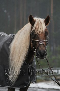 Ypaja Beautiful Horses, Animals Beautiful, Mane N Tail, Draft Horses, Horse Head, Horse Breeds, Pretty Face, Equestrian, Friends