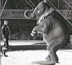 Polack Bros. Circus 1966