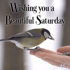 Wishing you a beautiful Saturday. #GoodMorning #Saturday #bird #birds #Morning #MorningGreeting #Greetings