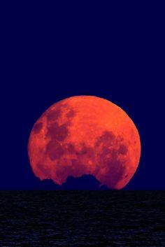 Wolf Moonrise | Luis Argerich
